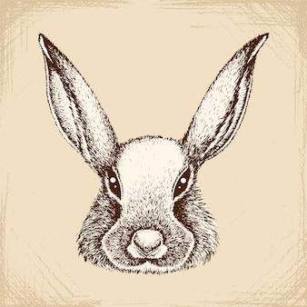 La faccia del coniglio