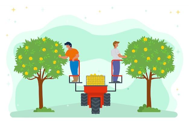 La gente di stagione di raccolta che usando la macchina del sollevatore