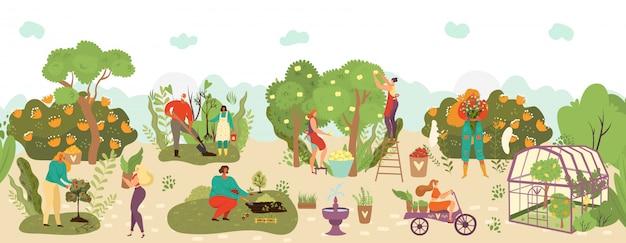 La gente in giardino che raccoglie il raccolto di frutti e l'agricoltura che coltiva l'illustrazione, i contadini raccolgono i frutti di caduta, piante.