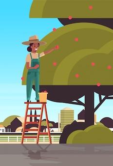La lavoratrice agricola che seleziona le mele mature dalla ragazza afroamericana dell'albero sulla raccolta della scala fruttifica nel verticale piano del fondo della campagna di concetto di stagione del raccolto del giardino