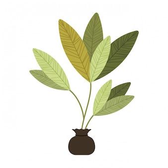 La pianta dell'albero coltiva l'icona isolata