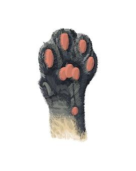 La zampa del gatto con i cuscinetti sollevati.