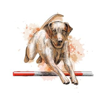 Labrador retriever che salta in un allenamento di agilità da una spruzzata di acquerello, schizzo disegnato a mano. illustrazione di vernici