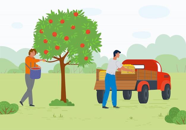 Lavoratori nel frutteto, mele mature, vettore di trasporto
