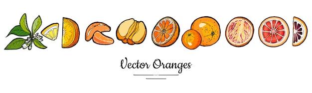 Le arance hanno messo isolato. arancia intera, tritata, fette, foglie di fiori. insieme disegnato a mano della raccolta della frutta alimento degli agrumi