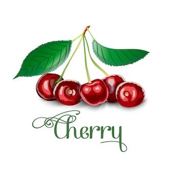 Le ciliege fresche sono bacche di un ciliegio.