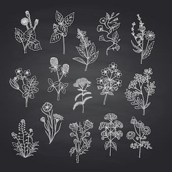 Le erbe mediche disegnate a mano hanno messo sul fondo nero della lavagna