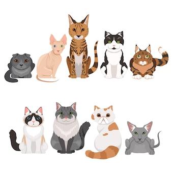 Le illustrazioni di vettore hanno messo di molti gattini differenti. personaggi dei gatti in stile cartoon