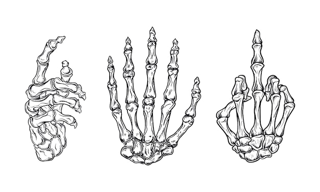 Le ossa della mano hanno messo l'illustrazione di vettore