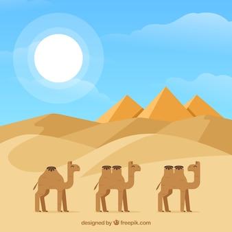 Le piramidi egiziane piane abbelliscono con la carovana del cammello