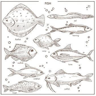 Le specie di schizzo del pesce con i nomi vector le icone isolate di pesca messe