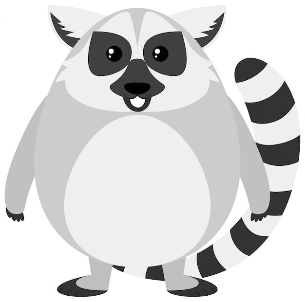 Lemure carino
