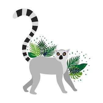 Lemure isolate nella priorità bassa bianca