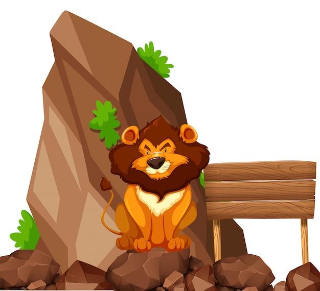Leone che si siede sulla roccia nel giardino zoologico
