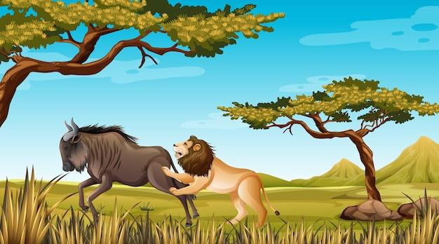 Leone e gnu in backgroud della natura