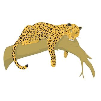 Leopardo su un albero