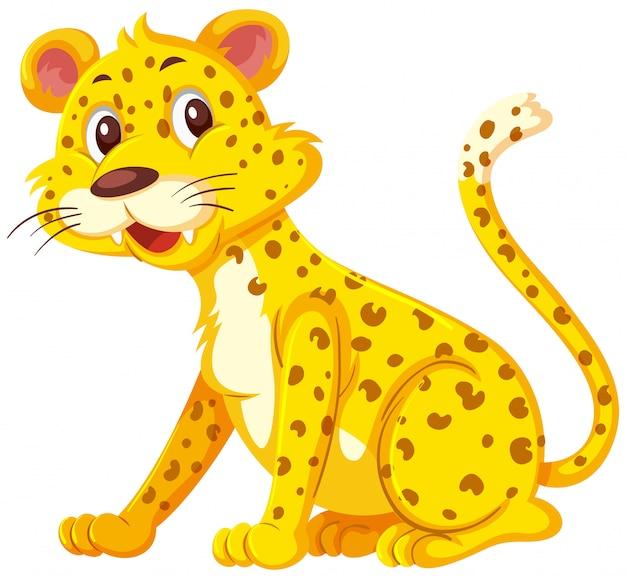 Leopardo sveglio su fondo bianco