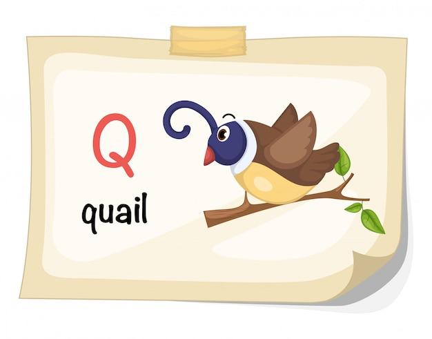Lettera q dell'alfabeto animale per il vettore dell'illustrazione delle quaglie