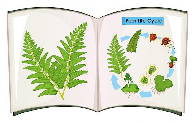 Libro del ciclo di vita di felce