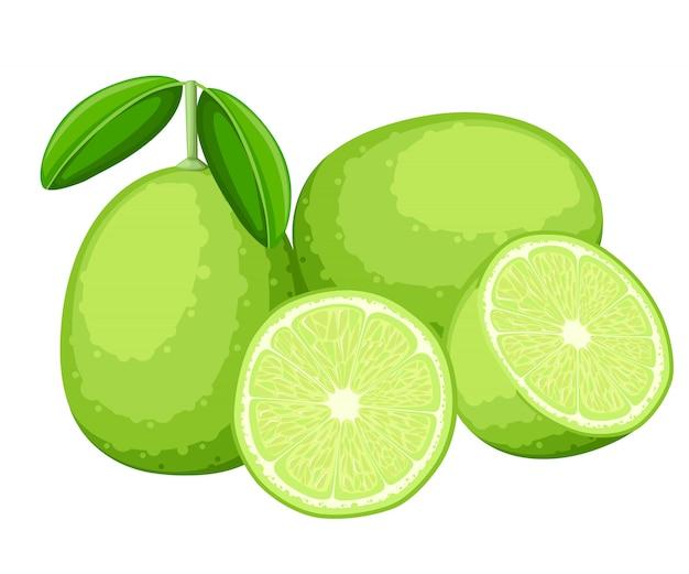 Lime e fette di lime. illustrazione di lime. illustrazione per poster decorativo, prodotto naturale emblema, mercato degli agricoltori. pagina del sito web e app mobile