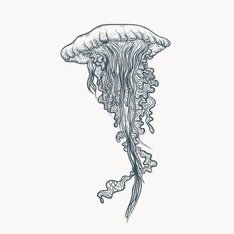 Linea arte illustrazione di meduse