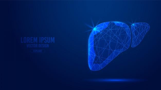 Linee geometriche di organo umano epatico, wireframe a triangoli bassi poligonali