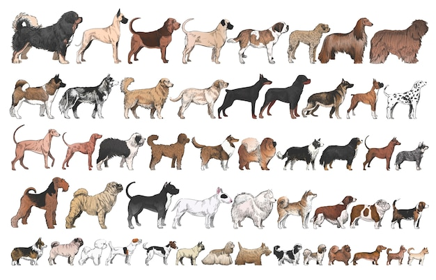 Lo stile di disegno dell'illustrazione del cane alleva la raccolta