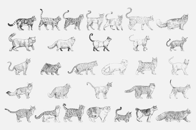 Lo stile di disegno dell'illustrazione di gatto alleva la raccolta