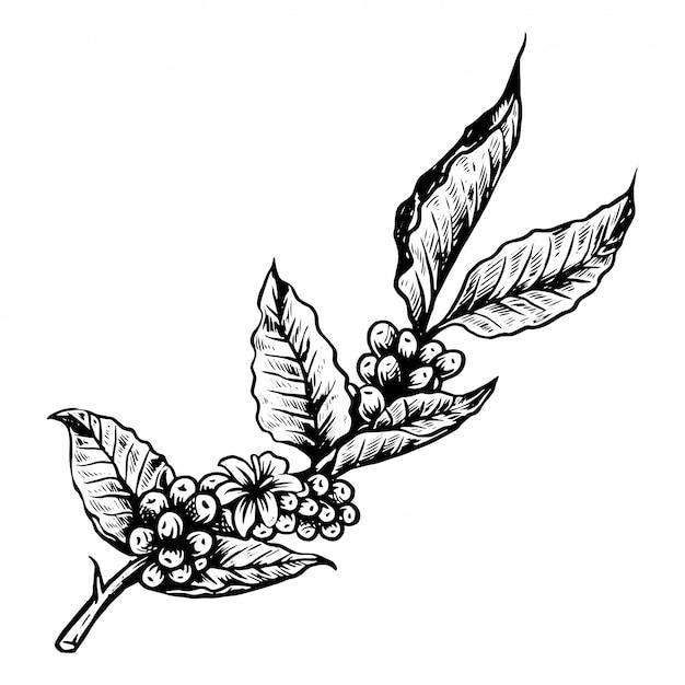 Logo dell'albero del caffè