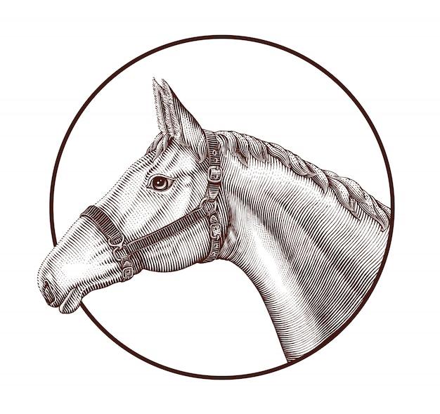 Logo della testa di cavallo nello stile d'annata dell'incisione di tiraggio della mano del cerchio isolato