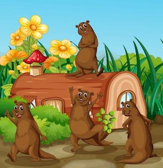 Lontra felice accanto alla casa di legno