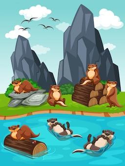 Lontre che vivono vicino al fiume