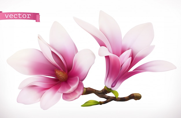 Magnolia. 3d realistico