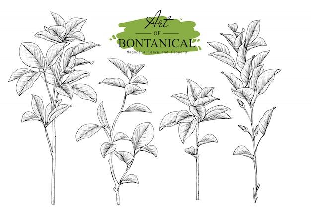 Magnolia leaf e disegni floreali