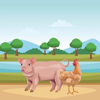 Maiale e gallina