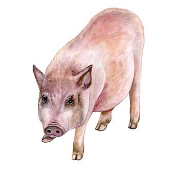 Maialino maiale in acquerello