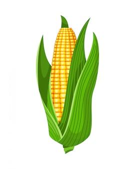 Mais. spiga di grano maturo isolato. pannocchia di mais giallo con foglie verdi. elemento di design fattoria estiva