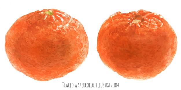 Mandarino alla frutta arancione