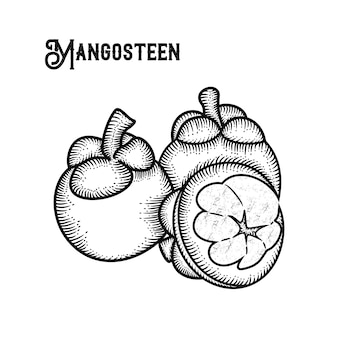 Mangosteen hand draw