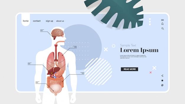 Manifesto infographic struttura del corpo umano con lo spazio orizzontale della copia del ritratto del sistema di anatomia degli organi interni