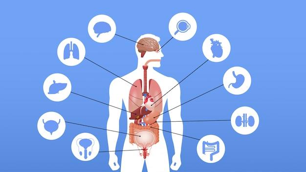 Manifesto infographic struttura del corpo umano con orizzontale del ritratto del sistema di anatomia delle icone degli organi interni