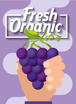 Mano che regge l'uva da frutta biologica fresca