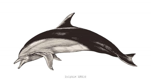 Mano del delfino che disegna clipart d'annata dell'illustrazione dell'incisione