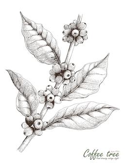 Mano dell'albero del caffè che disegna stile d'annata