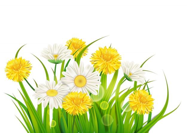 Margherite primaverili e denti di leone sfondo verde erba fresca, piacevoli colori primaverili succosi