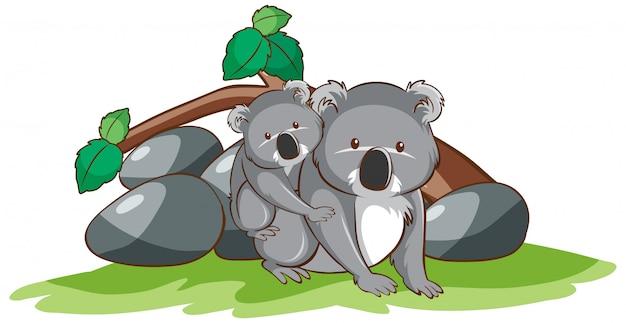 Maschera isolata del koala