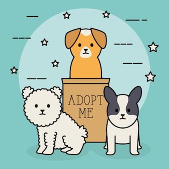Mascotte adorabili di cani di piccola taglia con scatola di cartone