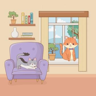 Mascotte di piccoli gatti nella stanza della casa