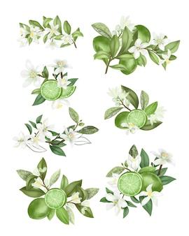 Mazzi di fiori disegnati a mano e composizioni di rami di alberi fioriti di lime (limone verde) isolati su sfondo bianco