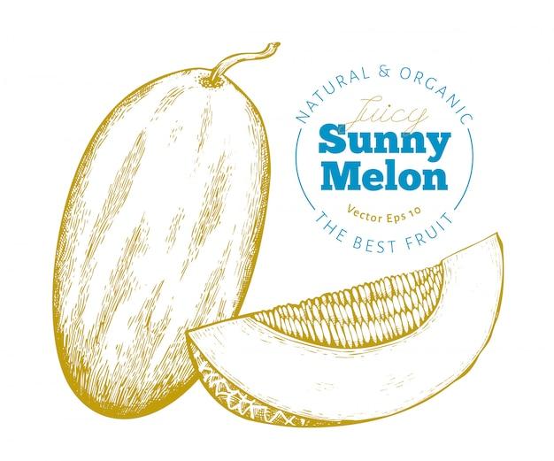 Melone intero e un pezzo di melone illustrazione di frutta esotica vettoriale disegnato a mano. frutta stile inciso illustrazione botanica d'epoca